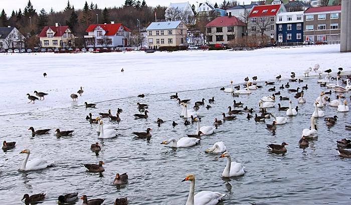 sur islandia a tu aire viajar islandia